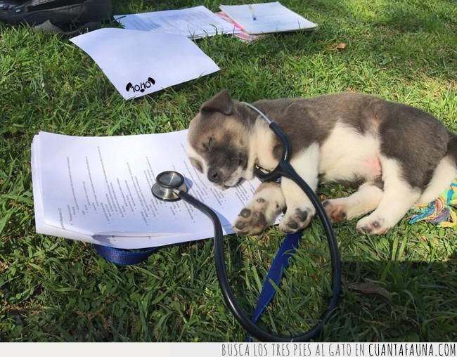 aparato,césped,confiar,doctor,estetoscopio,médico,papeles,perro