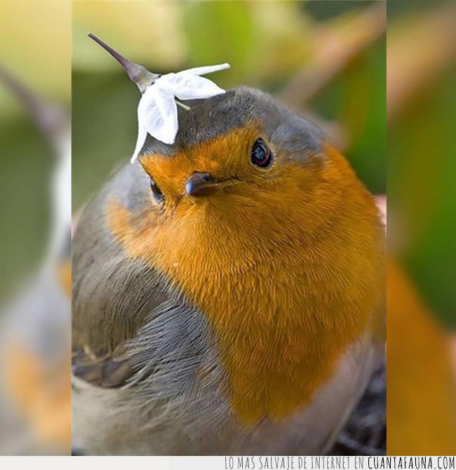 cabeza,flor,moda,otoño,pájaro,sombrero