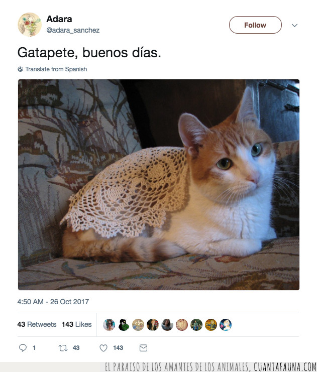 blanco,especie,gato,nacimiento,nueva,tapete,tejido,tela,tweet