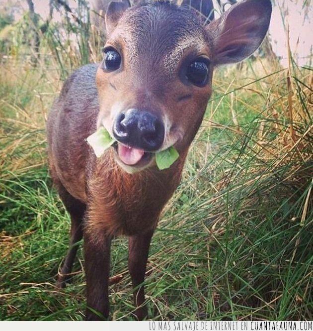 aperitivo,ciervo,comer,fotogénico,hora,sonreír,verde