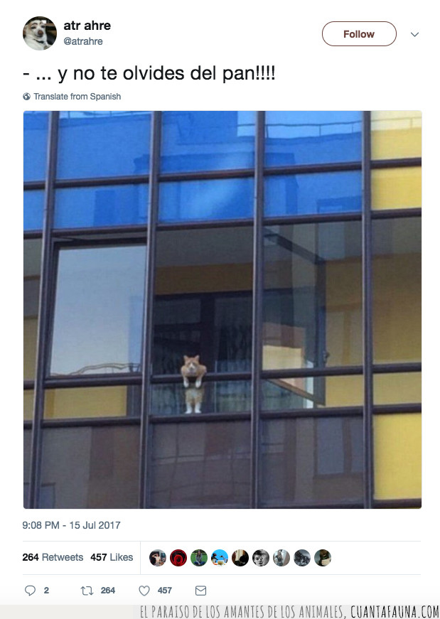 gato,mandar,olvidar,pan,recados,ventana