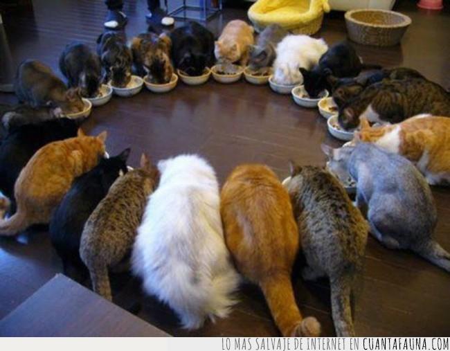 círculo,comer,comida,gatos,hora,loca