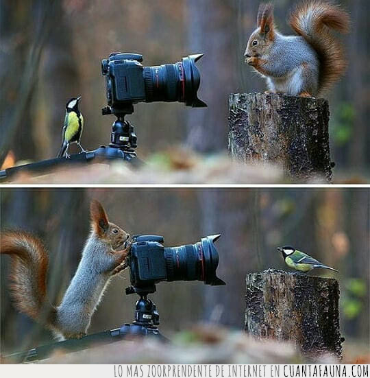 ardilla,bosque,foto,fotógrafo,pájaro,preguntar