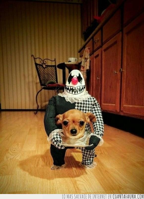 disfraz,mejor,perro