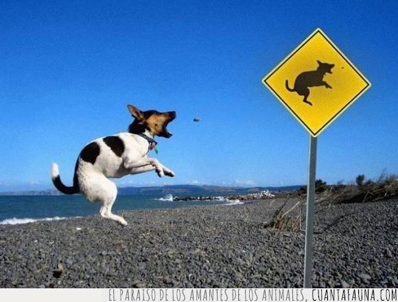 imitar,ladrido,perro,señal