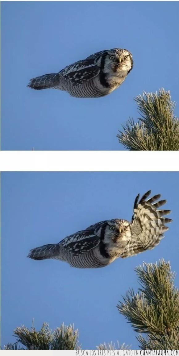 bocina,búho,coche,saludar,volar