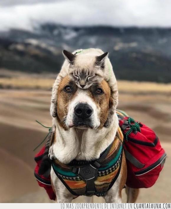 can,cartel,dormir,felino,gato,humor,perro