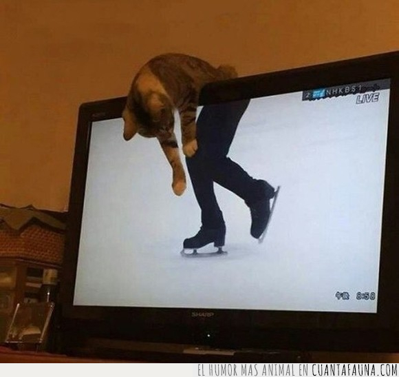 gato,hielo,patinaje,tv