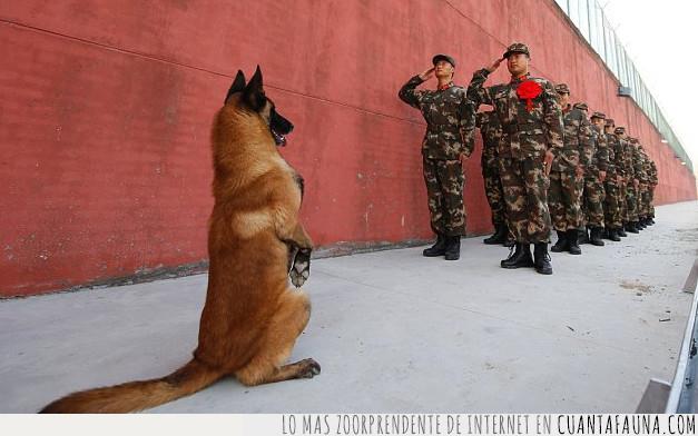 china,ejercito,perro