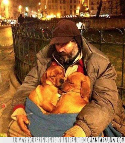 homeless,perro