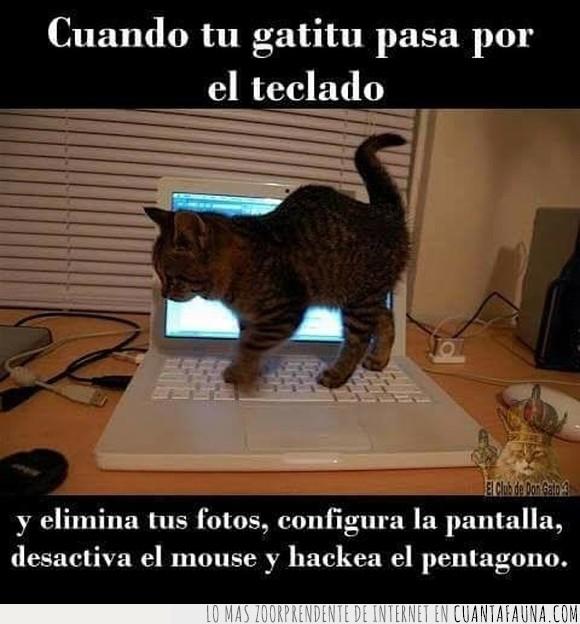 gatito,gato,ordenador,portátil