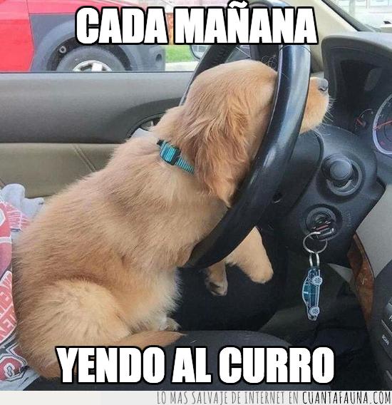 cansado,coche,conducir,perro,vago