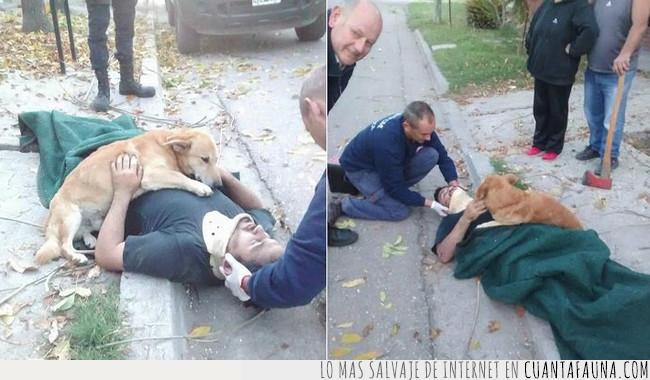 herido,humano,perro