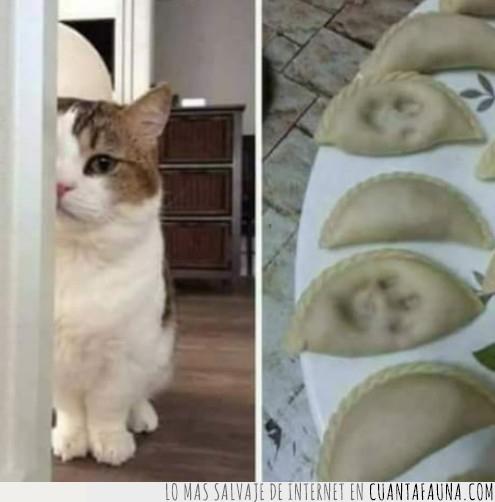 culpable,gato