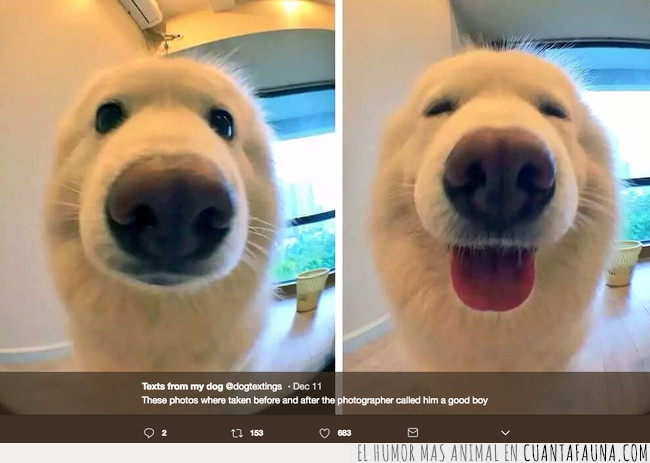 foca,perro