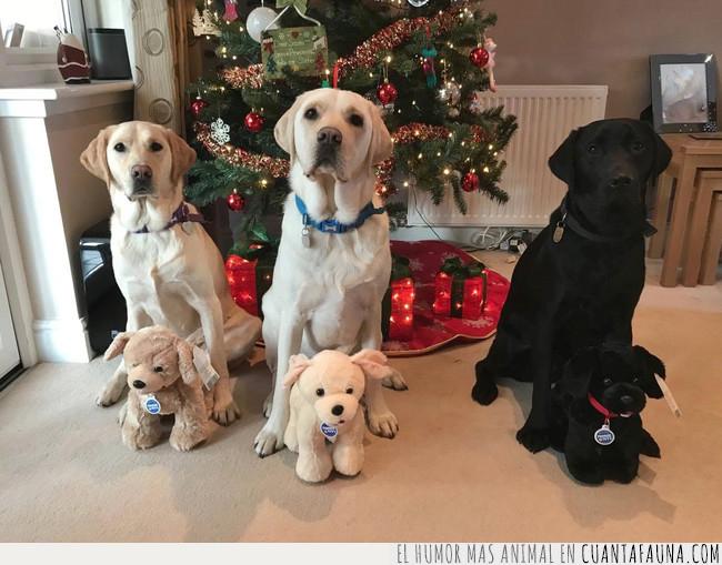 perro,regalo