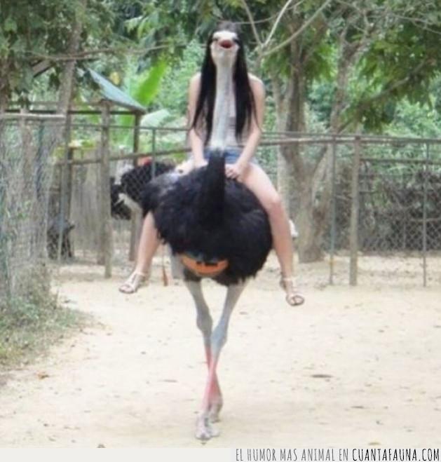 avestruz