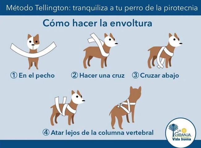 perro,petardos,pirotecnia
