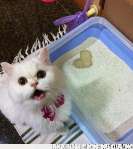 gato,pipi