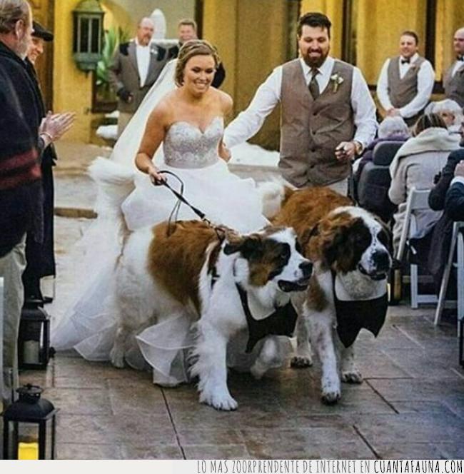 boda,san bernardo