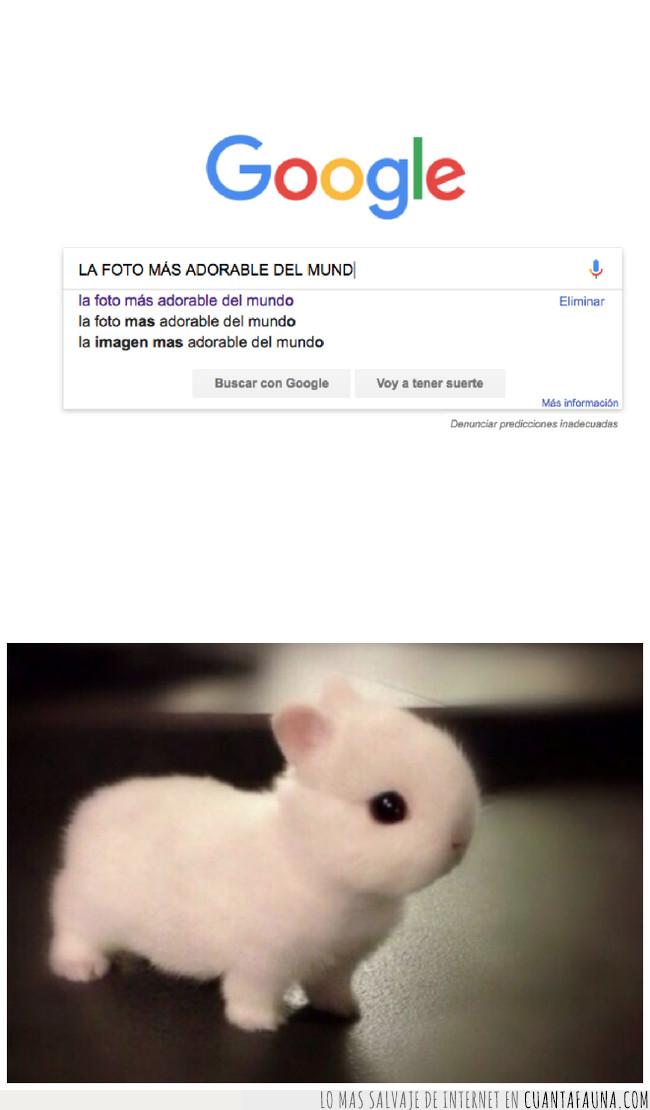 conejo,google