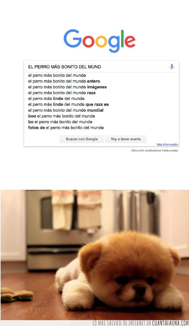 google,perroso