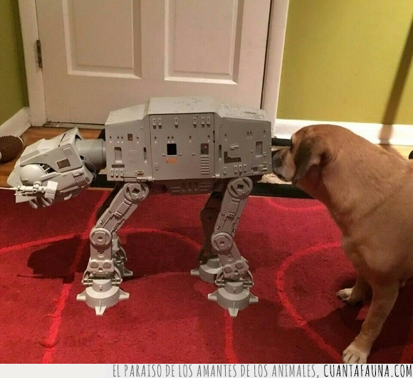 can,perro,Star Wars