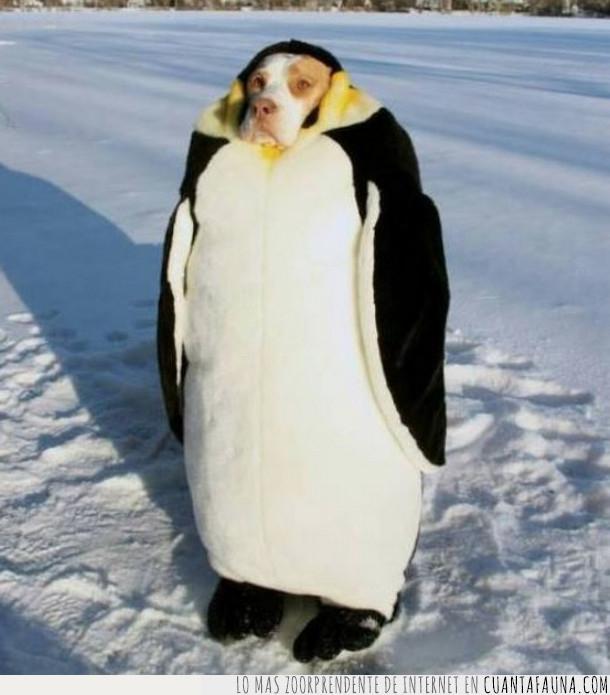 perro,pingüino