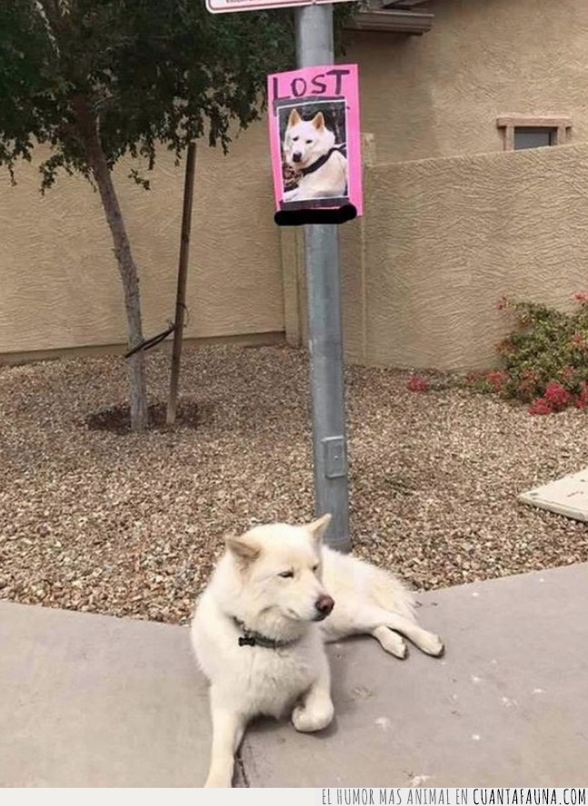 perdido,perro