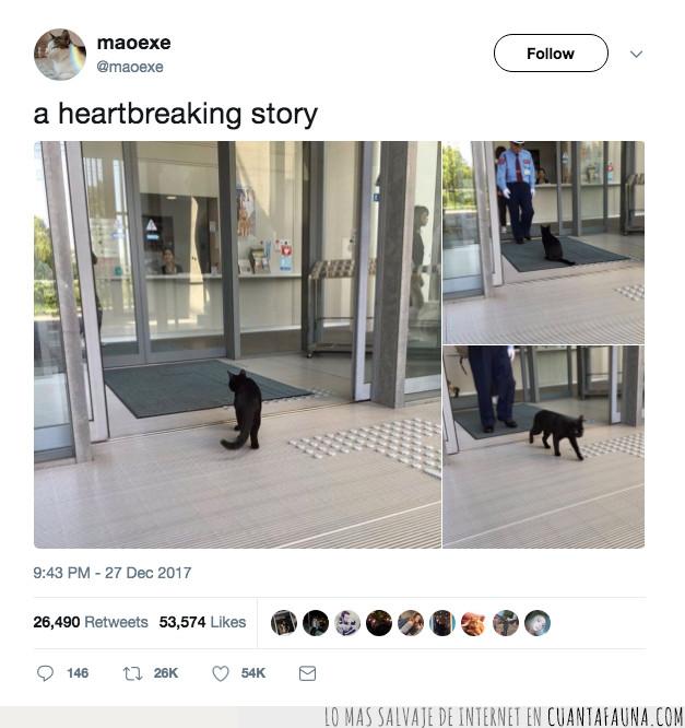 gato,hospital,tweet