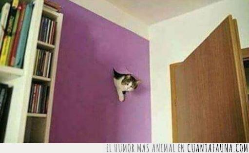 gato,pared