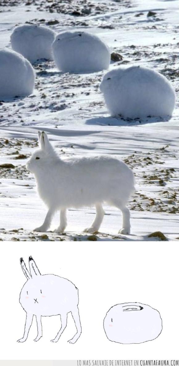 conejo,liebre ártica,pokemon