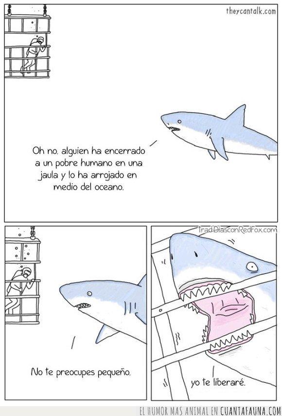ayudar,buceador,jaula,tiburón