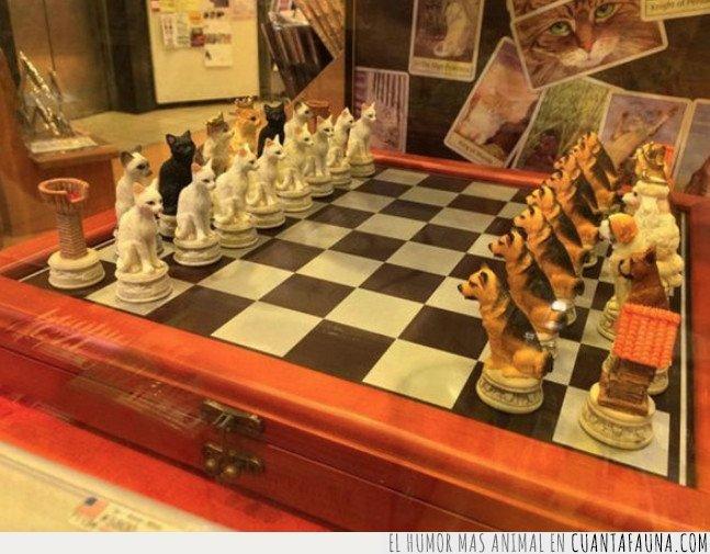 ajedrez,gato,perro