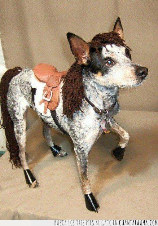 caballo,disfraz,perro