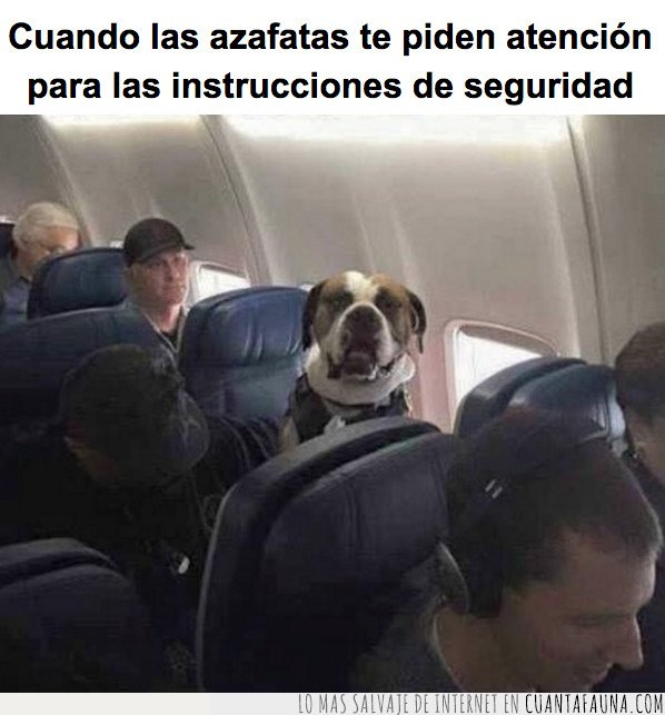 avion,perro