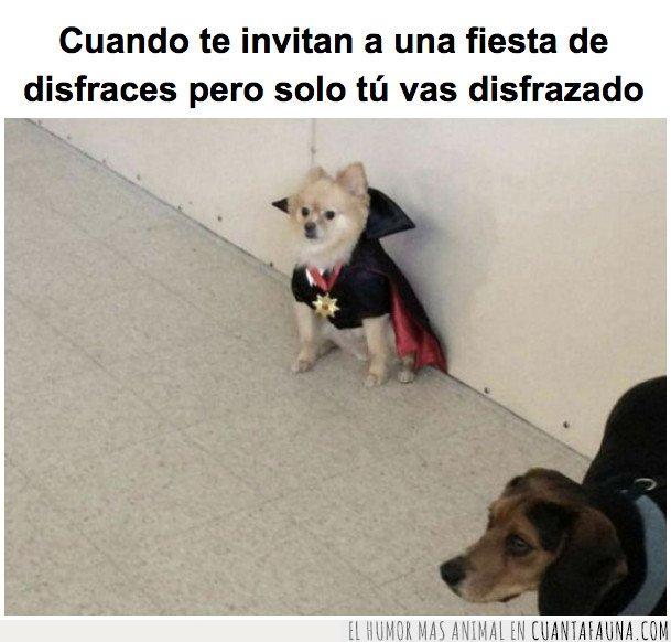 dracula,perro