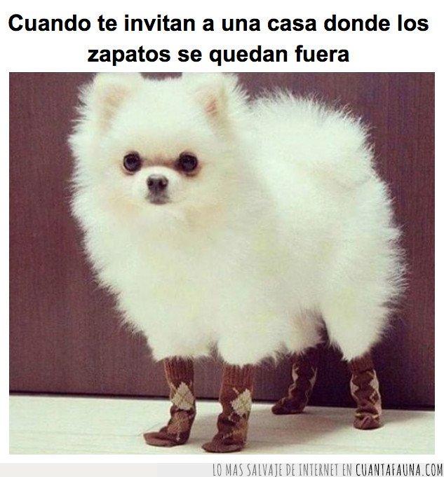 calcetines,perro
