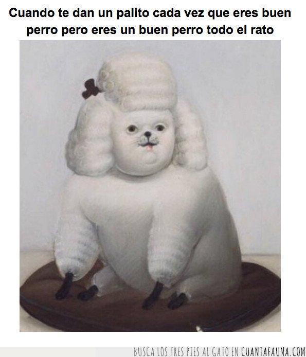 obeso,perro