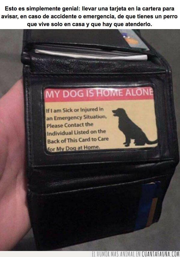 emergencia,perro