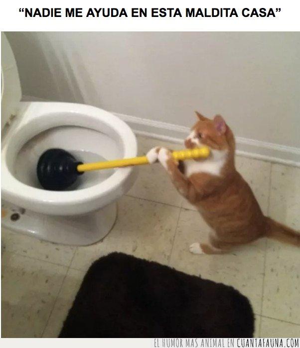 gato,limpia