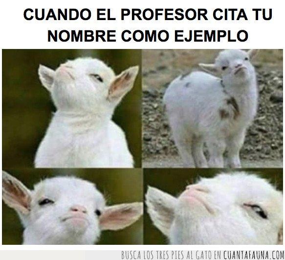 oveja,profesor