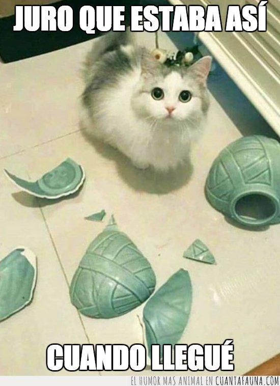 gato,romper