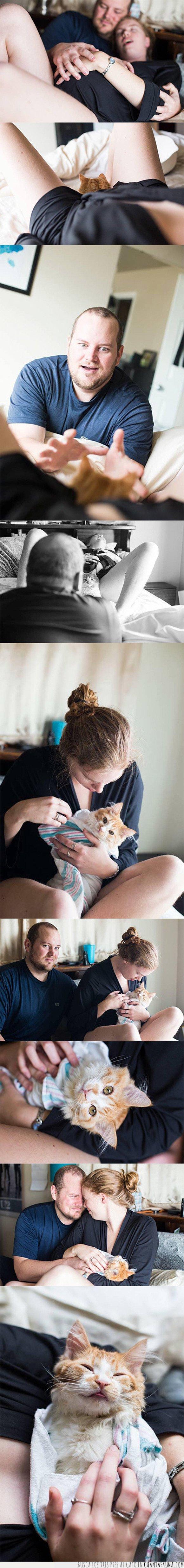 embarazo,gatos,parto