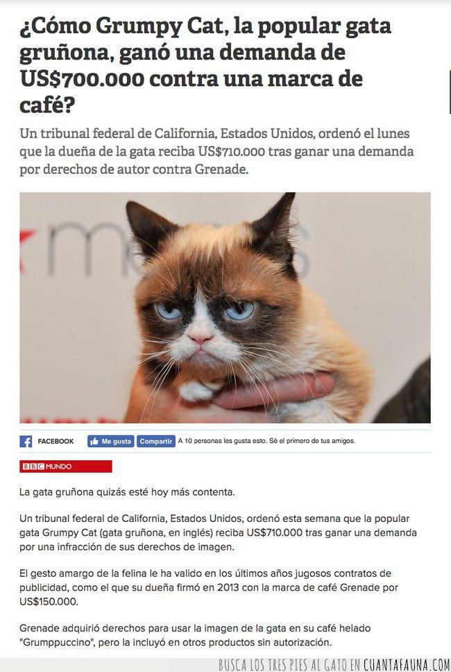 gato,grumpy cat