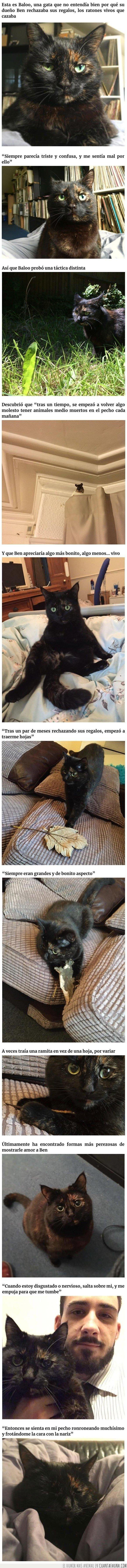 animales,gato,hojas