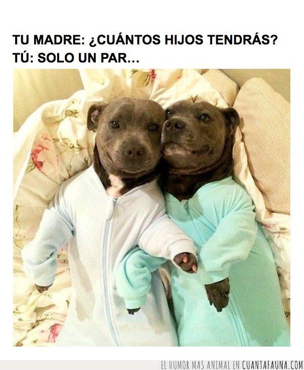 perros,pijama