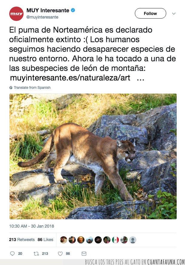 extinto,puma