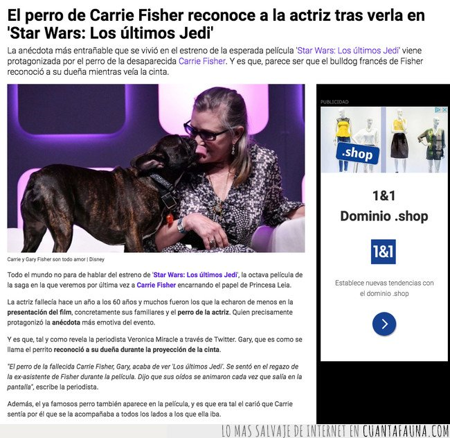 carrie fisher,perro,star wars