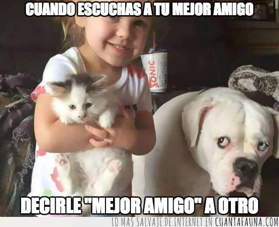 amistad,gato,perro